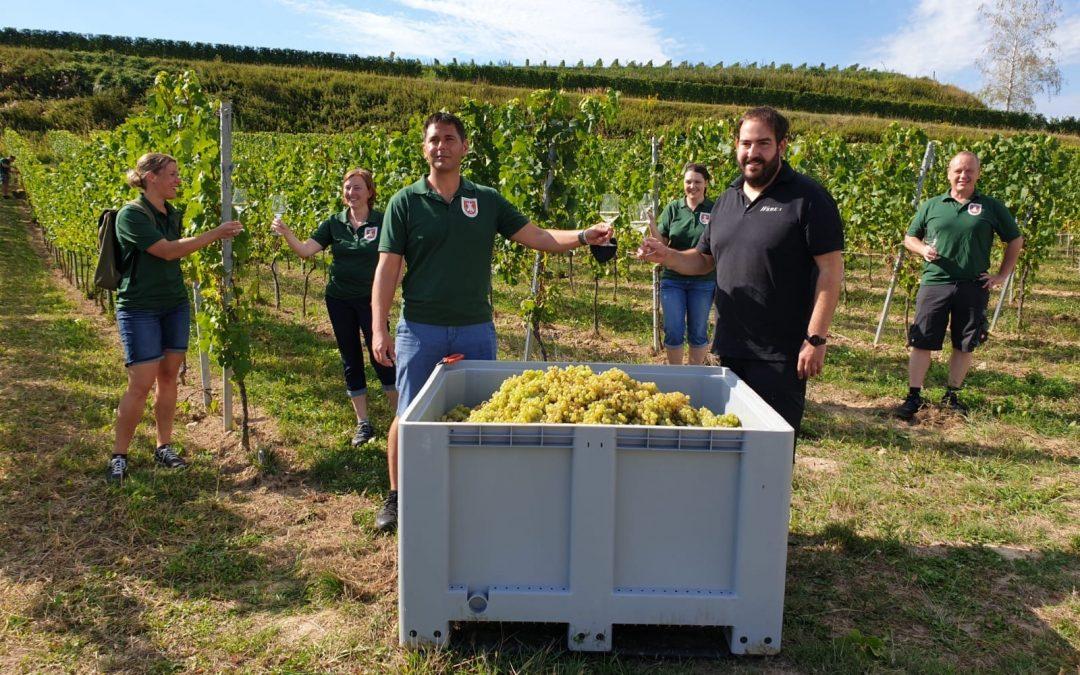 Rund um den Jubiläumswein/ Herbsten beim Weingut Weber